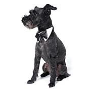 개 매다/보타이 강아지 의류 여름 모든계절/가을 리본매듭 귀여운 웨딩 화이트 블랙 오렌지 옐로우 그린