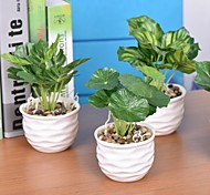 "3.9""L 7.48""H Fresh Green Plants in White Ceramic Basin"