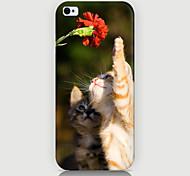 neugierig auf die Katze-Musterfall der rückseitigen Abdeckung für Phone5 / 5s Fall