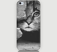 The Kitten Pattern Case Back Cover for Phone5/5S Case