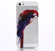 modello pappagallo materiale TPU soft phone per iPhone 5 / 5s