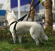 Pet Dog Leash Dog Large Dog Dog Gou Sheng